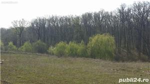 Vand teren intravilan Padurea Scrovistea Peris parcele 6600m2 sau 3300m2 - imagine 3