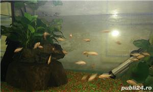 Vand ciclide, acvarii, filtru extern si intern - imagine 5