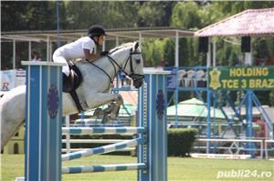 DARIUS(cal sport shagya-arab) - imagine 4
