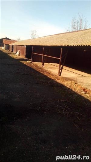 Inchiriere hale Comuna Ciorani - imagine 7