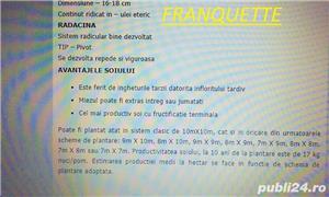 Nuc altoit Franquette 38lei - imagine 5