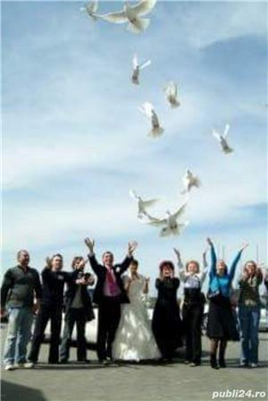 Porumbei pentru nunti  botezuri evenimente speciale din viata dumneavoastra - imagine 5