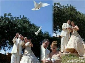 Porumbei pentru nunti  botezuri evenimente speciale din viata dumneavoastra - imagine 4