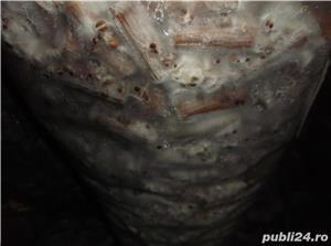 dibluri insamantate cu miceliu de ciuperci - imagine 9