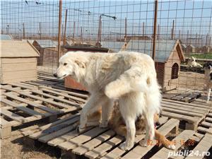 Micky,ursuletul polar pt adoptie - imagine 5