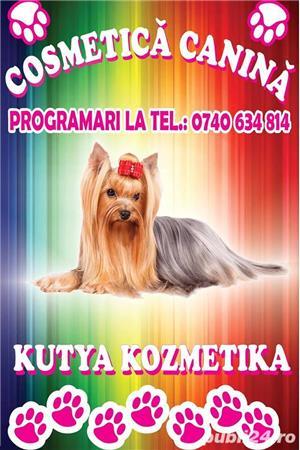 Salon cosmetica canina Satu Mare Closca - Kutya Kozmetika - imagine 1