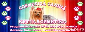 Salon cosmetica canina Satu Mare Closca - Kutya Kozmetika - imagine 2