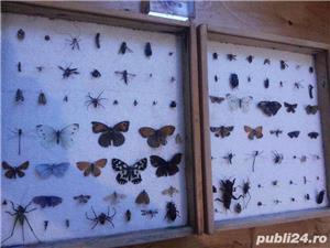 Doua insectar e - dif. insecte - imagine 2