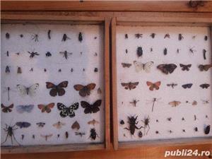 Doua insectar e - dif. insecte - imagine 1