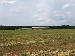 Vand imobil, inchiriez, fosta ferma vaci Branesti-Ilfov. Super pozitie - imagine 2