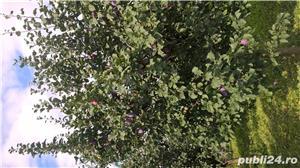 vand prune - imagine 2