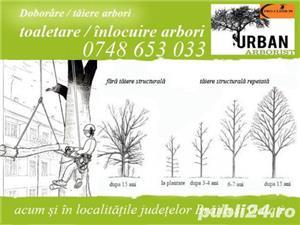 Taiere copaci toaletare /doborare arbori - imagine 1