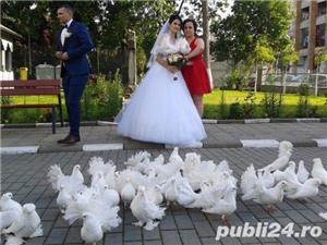 Porumbei de inchiriat la nunti  - imagine 2
