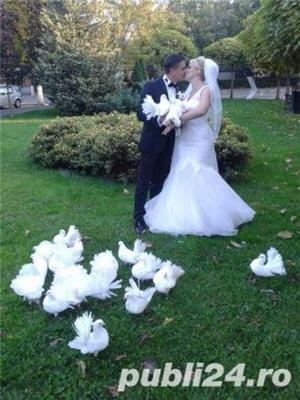 Porumbei de inchiriat la nunti  - imagine 4