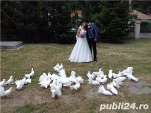 Porumbei de inchiriat la nunti  - imagine 3