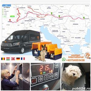 Transport catei pisici international  - imagine 5