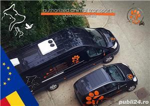 Transport International animale  - imagine 3