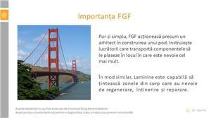 Laminine - activeaza celulele stem din organism - imagine 14