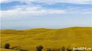 cumpar teren arabil 2000-4000 euro ha oriunde jud. vaslui - imagine 1