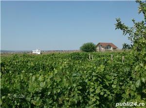 COPOU  Viticultori Eudoxiu Hurmuzachi 20000 mp cu 41 euro - imagine 4