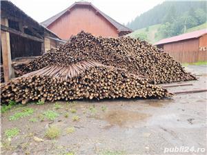 Cumpăr lemn subțire (pari, tutori) - imagine 2