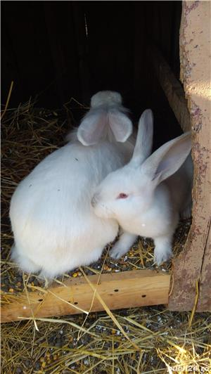 Schimb - iepuri cu albine  - imagine 2