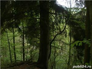 Vand proprietate in Bradulet, Arges. 35000euro. - imagine 8