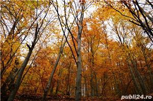 Cumpar padure in Romania direct de la proprietar(minim 20 hectare) - imagine 1