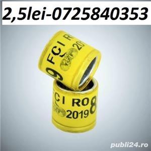 Vind inele porumbei -standard- 2019 -1leu buc  - imagine 9