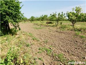 Vând casă cu teren de 6800m2, sat Iazurile județul Tulcea  - imagine 2