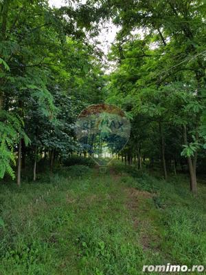 Vila pe un domeniu de 6 hectare in Sauaieu/Bihor - imagine 14