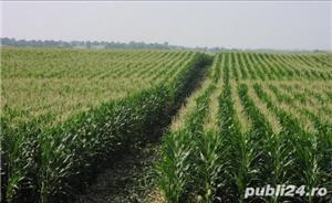 Vând Fermă Agricolă Vegetală.  - imagine 3