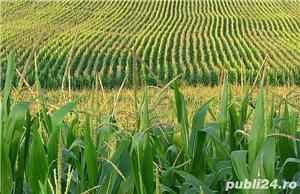 Vând Fermă Agricolă Vegetală.  - imagine 4