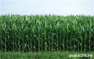 Vând Fermă Agricolă Vegetală.  - imagine 2