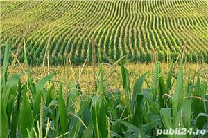 Vând Fermă Agricolă Vegetală  - imagine 2