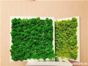 Tablou licheni stabilizati - imagine 8