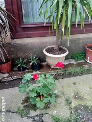 Vand flori la ghiveci - imagine 4