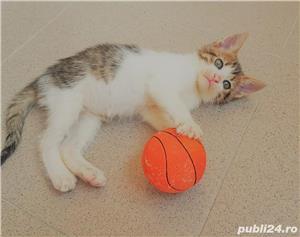 Adoptie pui de pisica - imagine 5