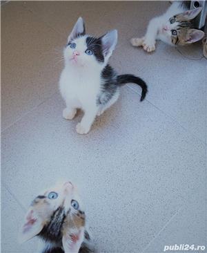 Adoptie pui de pisica - imagine 6