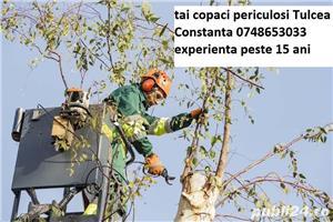 copaci mari taiere doborare - imagine 4