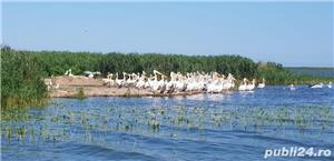 Excursii in Delta, Transport Jurilovca - Gura Portitei si retur - imagine 6