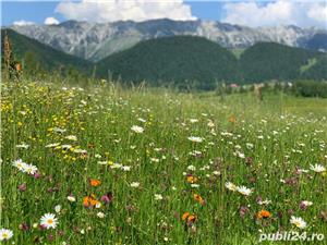 Teren 5300 zona Bran-Moeciu, satul Pestera - imagine 7