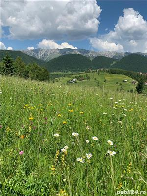 Teren 5300 zona Bran-Moeciu, satul Pestera - imagine 8