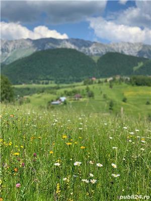 Teren 5300 zona Bran-Moeciu, satul Pestera - imagine 6