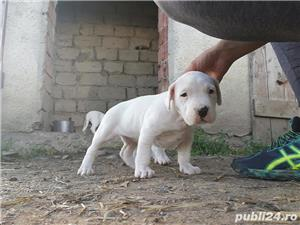 Vand dog argentinian! - imagine 1