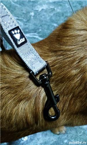 NOUA Lesa HURTTA Casual Reflective Leash pentru caini de talie MEDIE sau MARE NOUA cu eticheta - imagine 5