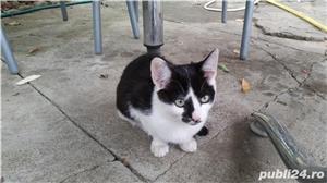 Pisici pentru adoptie - imagine 1