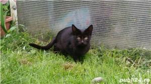 Pisici pentru adoptie - imagine 2