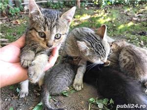 Ofer gratuit 3 pisicuțe jucăușe - imagine 3
