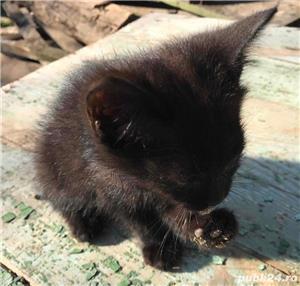 Ofer gratuit 3 pisicuțe jucăușe - imagine 2